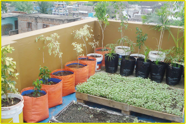 Terrace Garden Services Chennai Roof Garden Kitchen