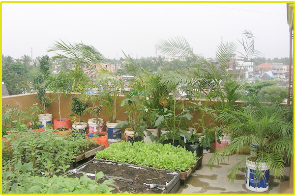 Terrace garden services chennai roof garden kitchen for Terrace kitchen garden india