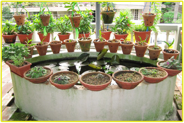 Terrace garden services chennai roof garden kitchen for Terrace kitchen garden ideas